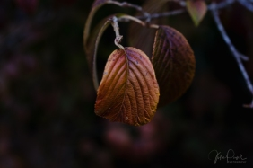 Julie Powell_Autumn-7