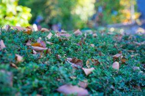 Julie Powell_Autumn