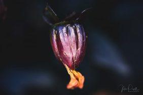Julie Powell_Autumn_RR-2