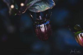 Julie Powell_Autumn_RR-3