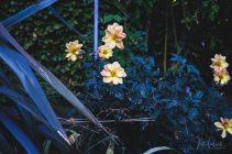 Julie Powell_Autumn_RR-7