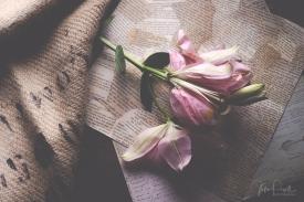 JuliePowell_flowers-12