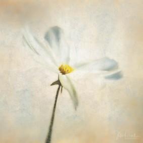 Julie Powell_Floral-2