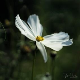 Julie Powell_Floral-3