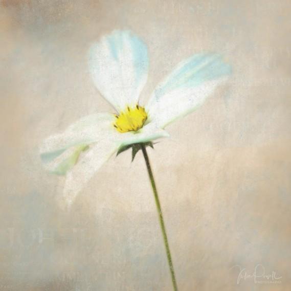 Julie Powell_Floral