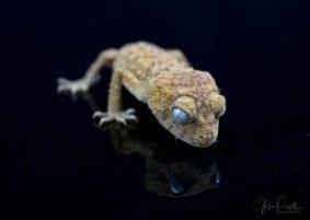 Julie Powell_Gecko-4