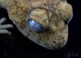 Julie Powell_Gecko-6