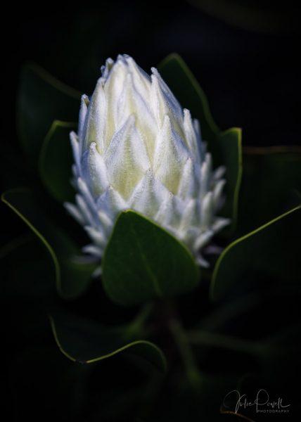 Julie Powell_King White-3