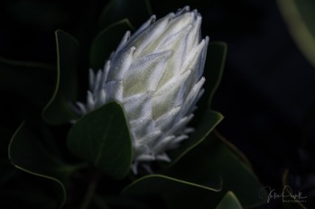 Julie Powell_King White-5