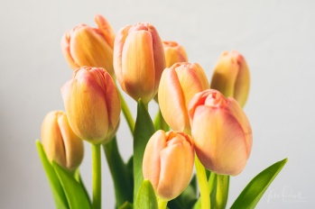 Julie Powell_Tulips-2
