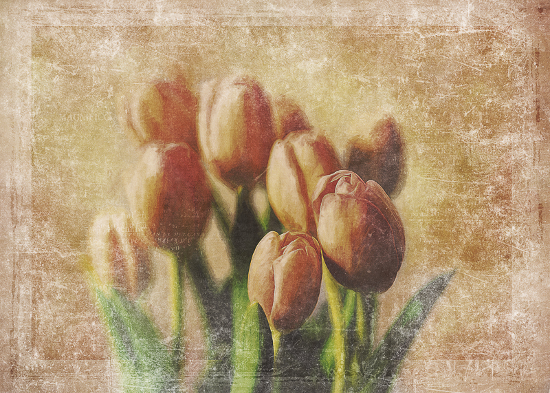 Julie Powell_Tulips in Gold