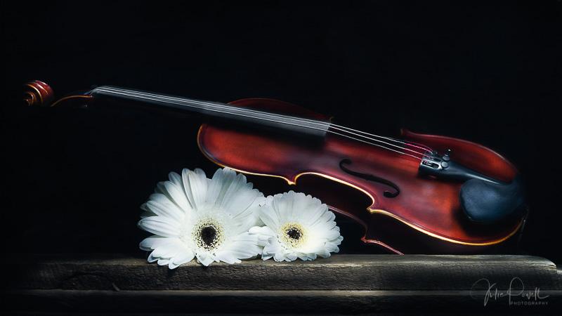 Julie Powell_Violin-2