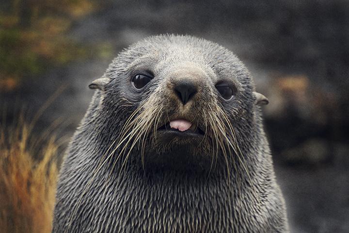 JuliePowell_Seal