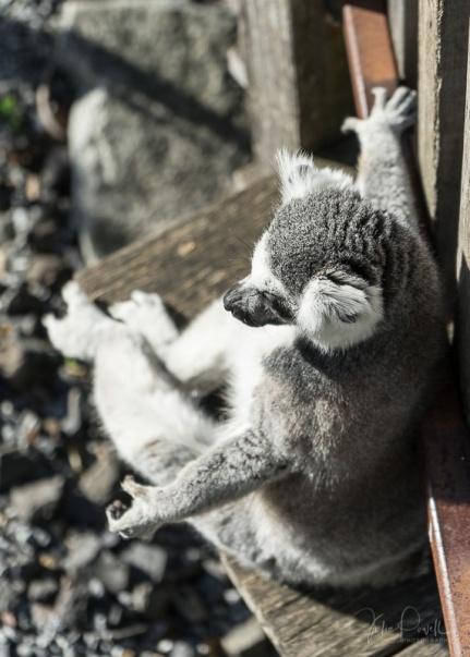 Julie Powell_M_Zoo-3