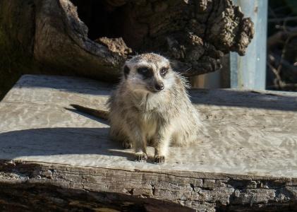 Julie Powell_M_Zoo-5