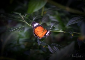 Julie Powell_Butterflies-2