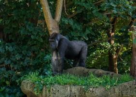Julie Powell_Melbourne Zoo-10