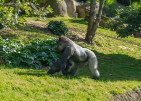 Julie Powell_Melbourne Zoo-11