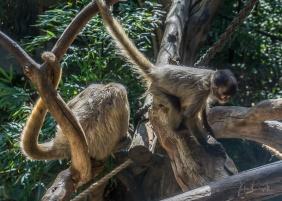 Julie Powell_Melbourne Zoo-13