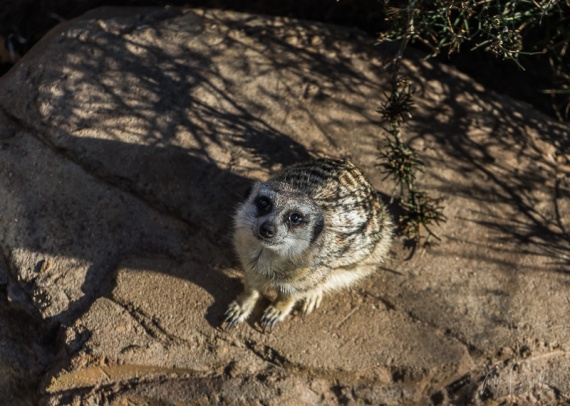 Julie Powell_Melbourne Zoo-14