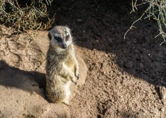 Julie Powell_Melbourne Zoo-15