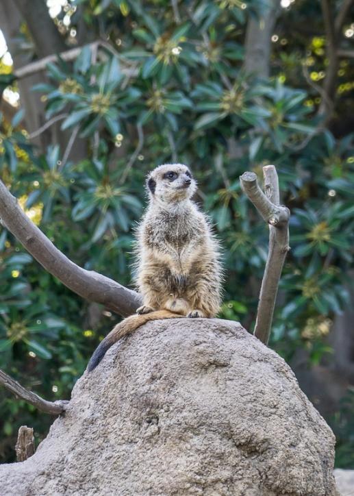 Julie Powell_Melbourne Zoo-18