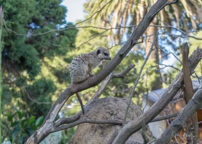 Julie Powell_Melbourne Zoo-20