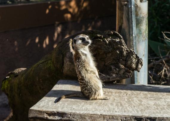 Julie Powell_Melbourne Zoo-22