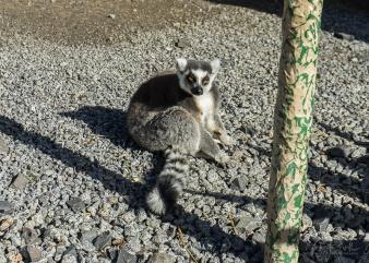 Julie Powell_Melbourne Zoo-3