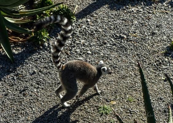 Julie Powell_Melbourne Zoo-5