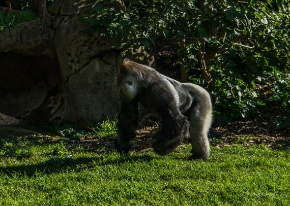 Julie Powell_Melbourne Zoo-8