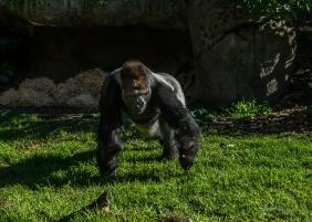 Julie Powell_Melbourne Zoo-9