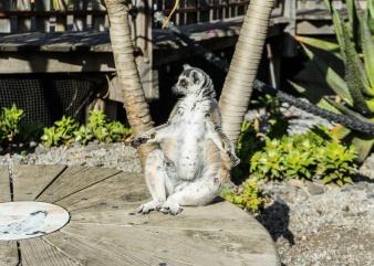 Julie Powell_Melbourne Zoo
