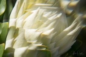 Julie Powell_Protea Fractals-4