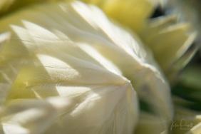 Julie Powell_Protea Fractals-5