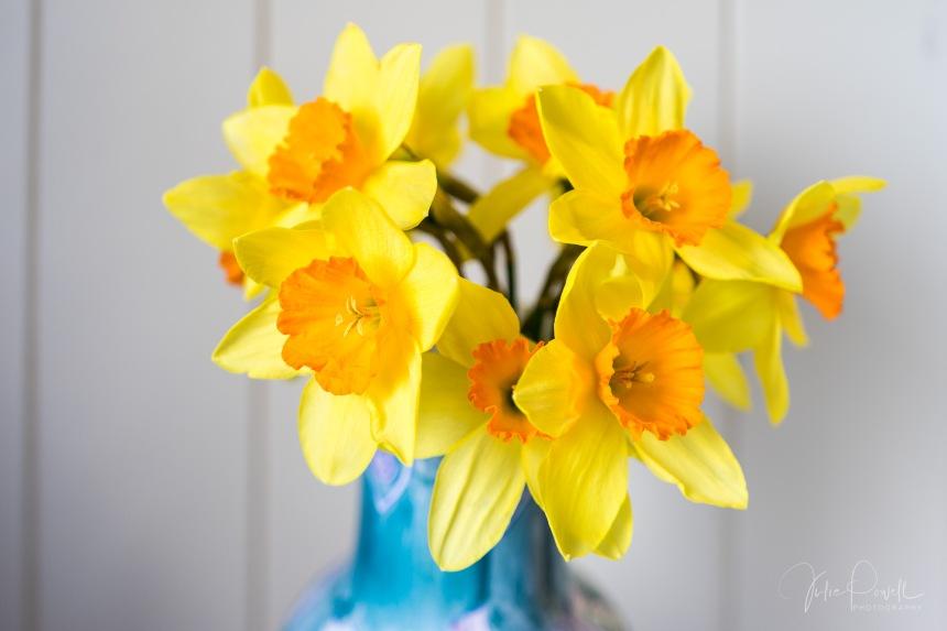Julie Powell_Daffodils