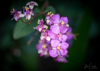 Julie Powell_Gardens-23