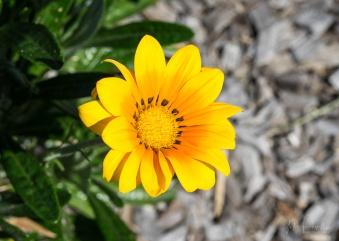 Julie Powell_Gardens-39