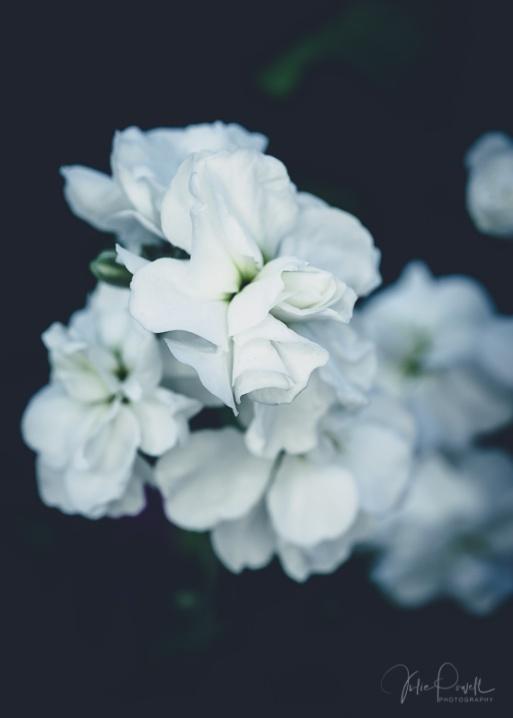 Julie Powell_Gardens-46