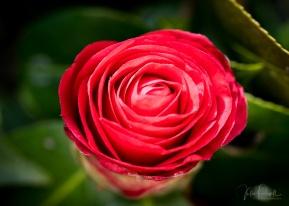 Julie Powell_Gardens-51