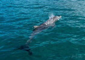 Julie Powell_Dolphin Cruise-2