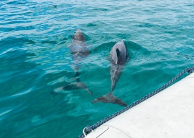 Julie Powell_Dolphin Cruise-3