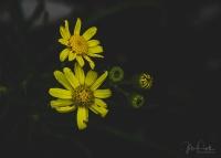 Julie Powell_Little Desert_2-16