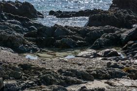Julie Powell_Snelling Beach-22