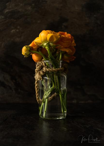Julie Powell_orange-06255