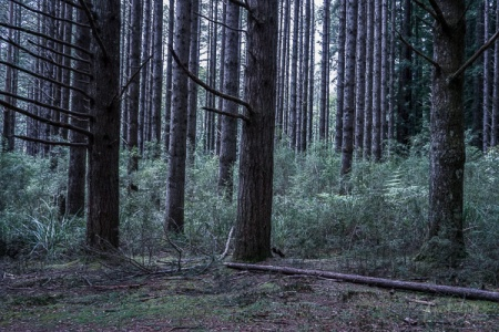 Julie Powell_Redwoods-07994