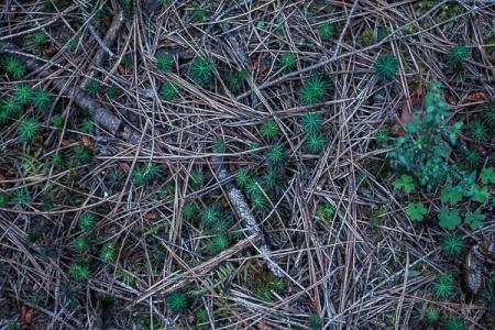 Julie Powell_Redwoods-07998