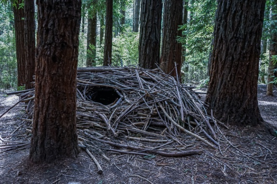 Julie Powell_Redwoods-08003