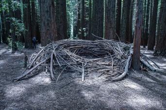 Julie Powell_Redwoods-08026