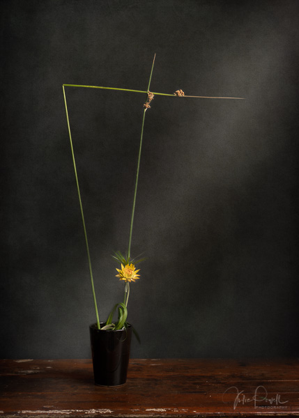 Julie Powell_Ikebana-3
